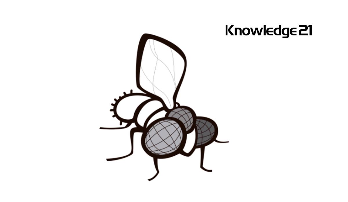 logo knowledge21